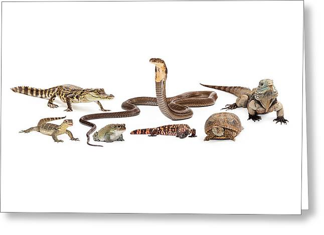 Group Of Various Reptiles Greeting Card