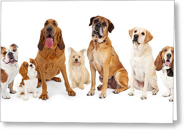 Group Of Various Size Dogs Greeting Card by Susan Schmitz