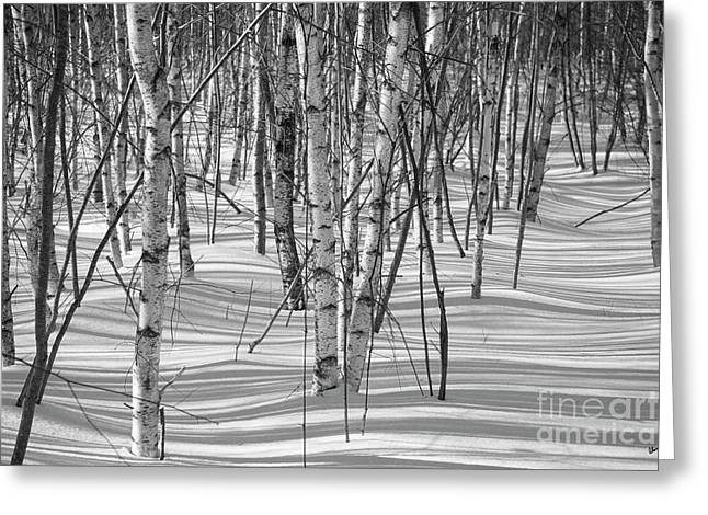 Group Of White Birches Greeting Card