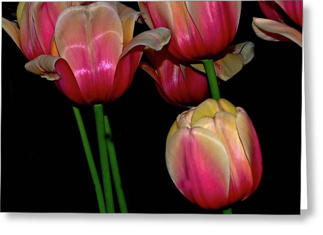 Grouping Ofpink And Yellow Tulips Greeting Card