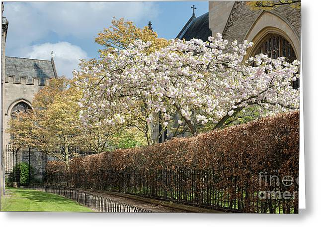 Grove Walk Cherry Blossom Oxford Greeting Card