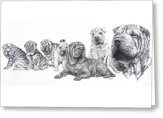 Greeting Card featuring the drawing Growing Up Chinese Shar-pei by Barbara Keith