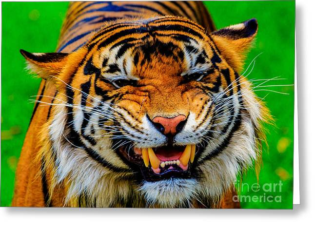 Growling Tiger Greeting Card