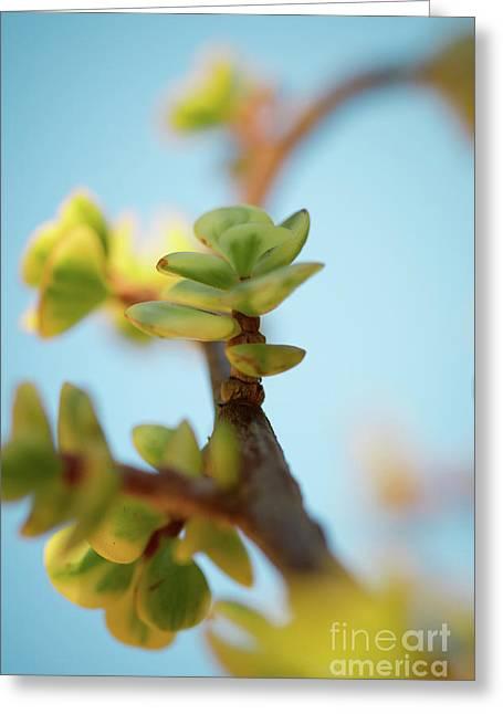 Growth Greeting Card by Ana V Ramirez