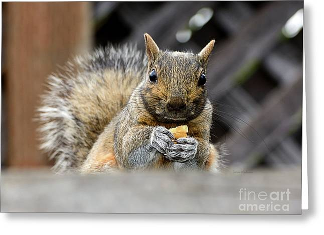 Grumpy Squirrel Greeting Card