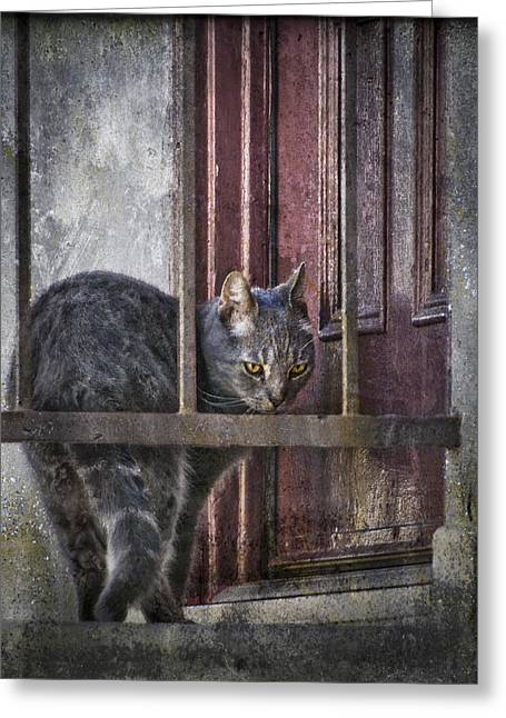 Greeting Card featuring the photograph Grunge Cat by Kevin Bergen