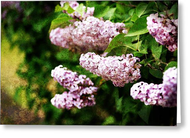 Greeting Card featuring the photograph Grunge Lilacs by Antonio Romero