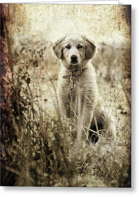 Old Labrador Greeting Cards - Grunge Puppy Greeting Card by Meirion Matthias