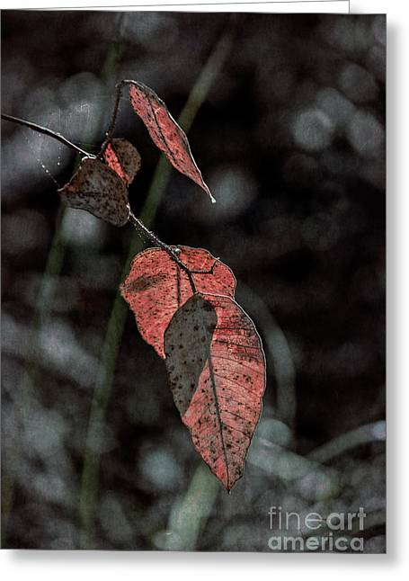 Greeting Card featuring the photograph Grungy Leaves by Elaine Teague