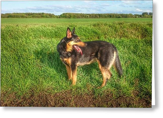 Gsd In The Country Greeting Card by Isabella F Abbie Shores FRSA