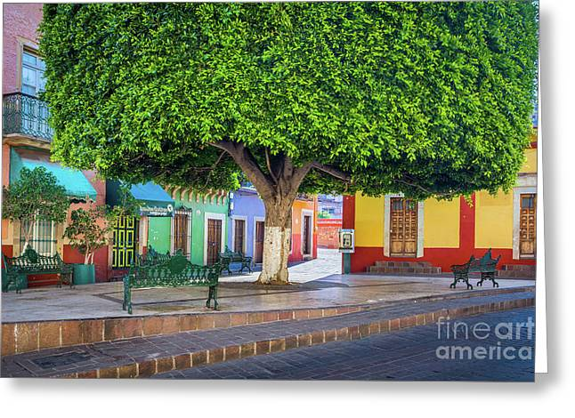 Guanajuato Small Park Greeting Card by Inge Johnsson