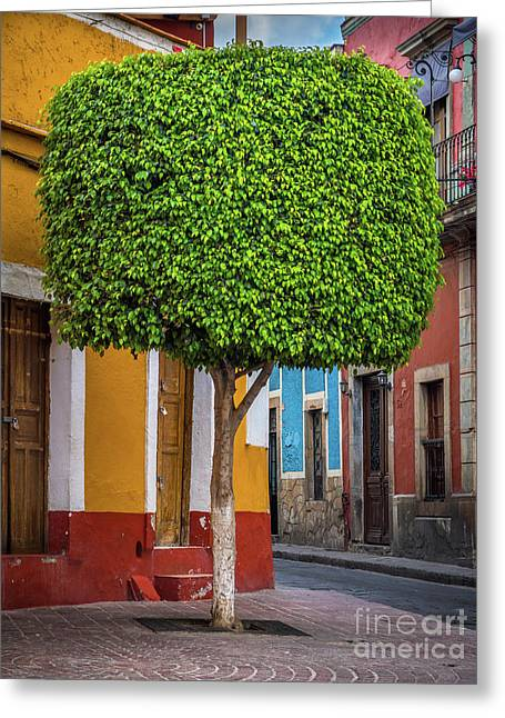 Guanajuato Tree Greeting Card