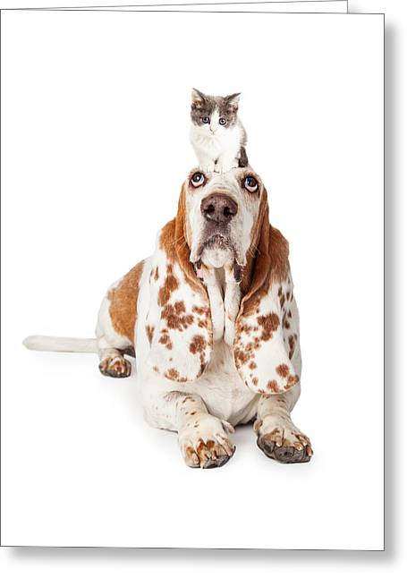 Guilty Looking Basset Hound Dog Laying   Greeting Card by Susan Schmitz