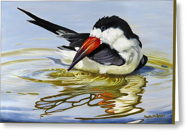 Gulf Coast Black Skimmer Greeting Card by Phyllis Beiser