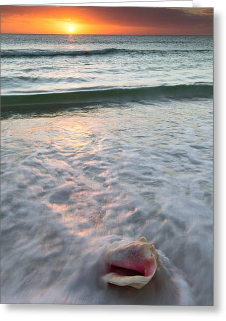 Greeting Card featuring the photograph Gulf Coast Sunset  by Patrick Downey