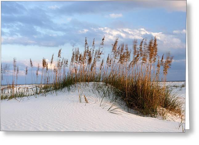 Alabama Photographs Greeting Cards - Gulf Dunes Greeting Card by Eric Foltz