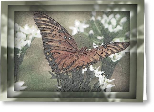 Gulf Fritillary Behind The Screen Greeting Card by Dottie Dees