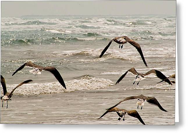 Gulf Gulls Greeting Card