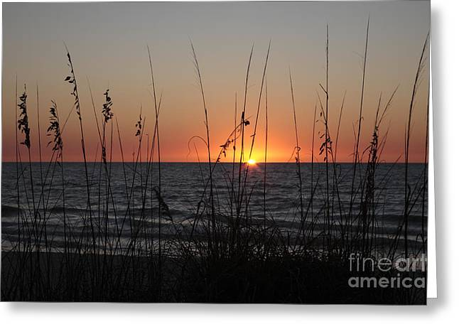 Gulf Sunset In Florida Greeting Card