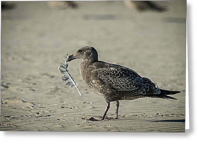 Gull And Feather Greeting Card