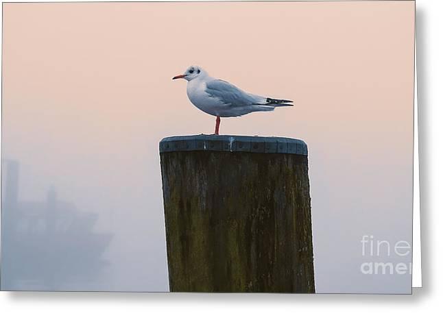 Gull And Fog Greeting Card