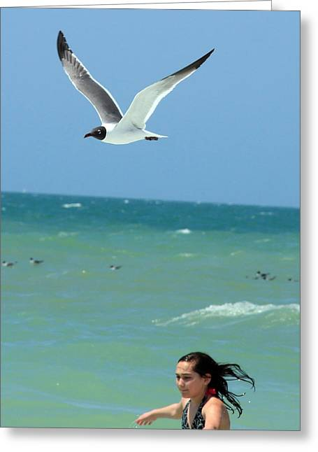 Gull And Girl Greeting Card