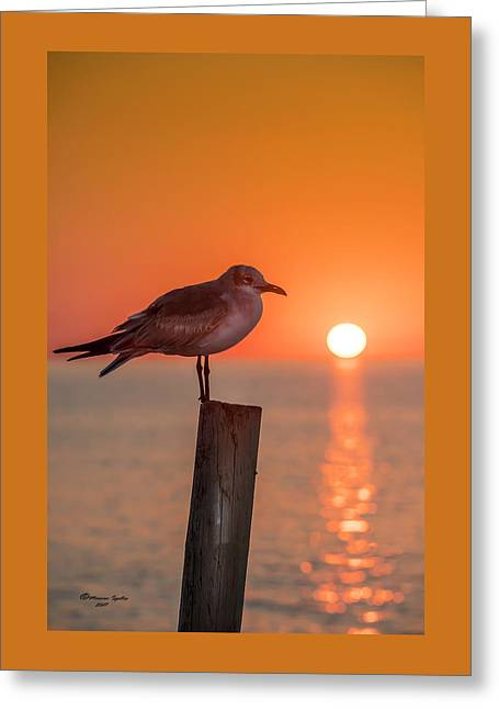 Gull And Sunset Greeting Card