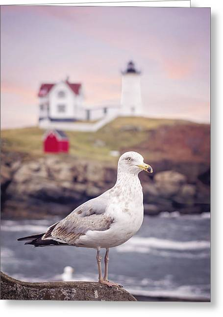 Gull At Nubble Greeting Card by Heather Applegate