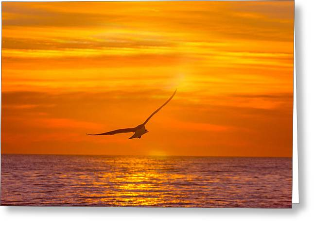 Gull At Sunrise Greeting Card by Allan Levin
