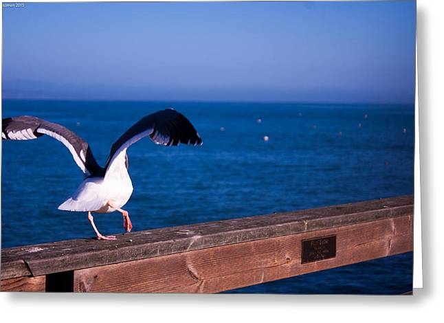 Gull Dance Greeting Card
