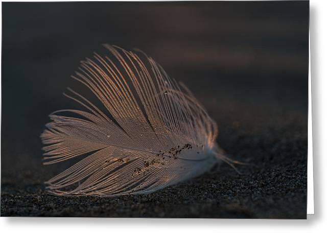 Gull Feather On A Beach Greeting Card