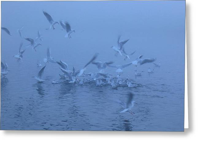 Greeting Card featuring the photograph Gull Feeding Frenzy by Rob Hemphill