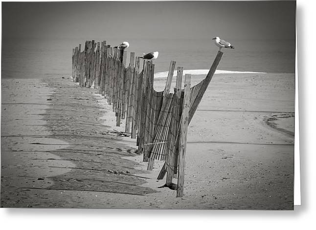 Gull Fence Greeting Card by Andy Smetzer