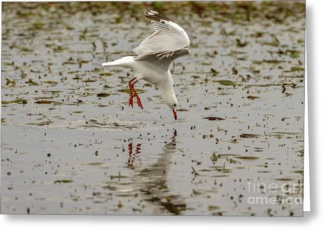 Gull Fishing 01 Greeting Card