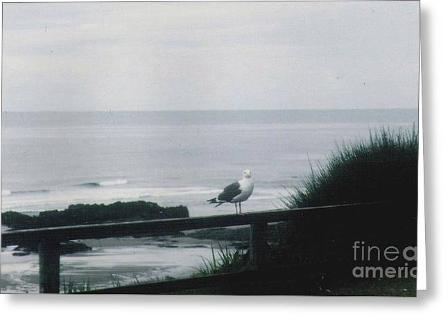 Greeting Card featuring the photograph Gull On A Rail by Charles Robinson