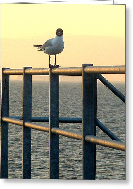 Greeting Card featuring the photograph Gull On A Rail by Michael Canning
