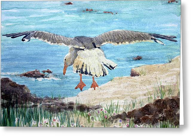 Flying Seagull Paintings Greeting Cards - Gull on the Washington coast Greeting Card by Stephen Boyle