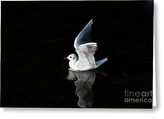 Gull On The Water Greeting Card by Michal Boubin