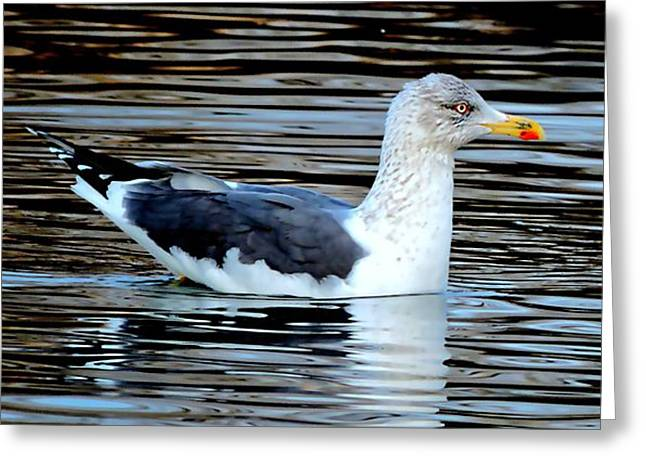 Gull On Winter's Pond  Greeting Card