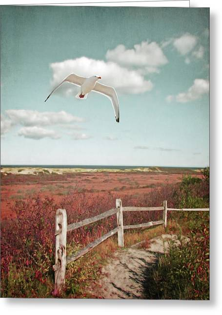 Gull Over Provincelands Trail, Cape Cod Greeting Card