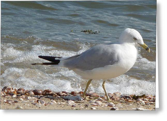 Greeting Card featuring the photograph Gull Strolling The Shore by Margie Avellino