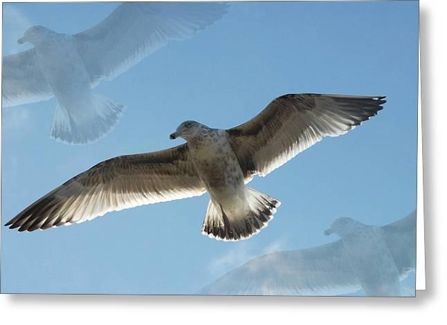 Gulls 41 Greeting Card by Joyce StJames