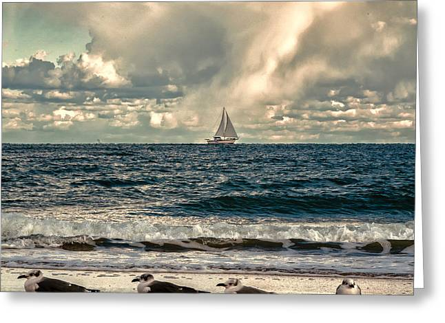 Gulls And Sails Greeting Card by Jim Moore