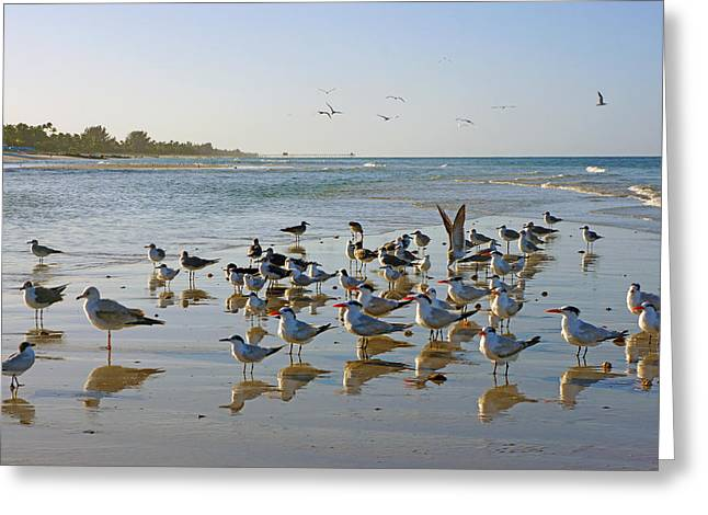 Greeting Card featuring the photograph Gulls And Terns On The Sanbar At Lowdermilk Park Beach by Robb Stan