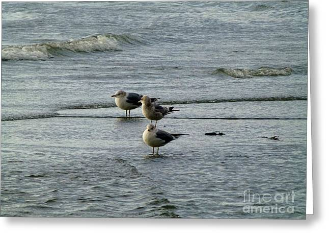 Gulls At A Seattle Beach Greeting Card by As the Dinosaur Flies Photography