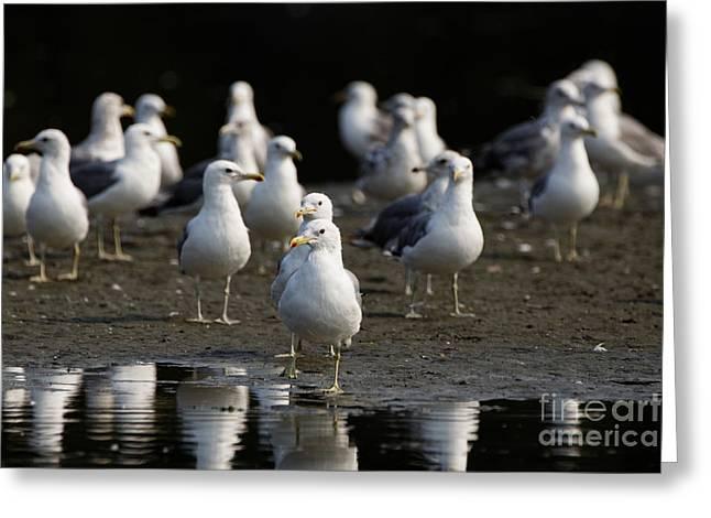 Gulls At The Beach Greeting Card
