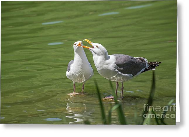 Gulls Courting Greeting Card by Kate Brown