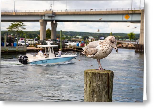 Gulls Cove Greeting Card by Karol Livote
