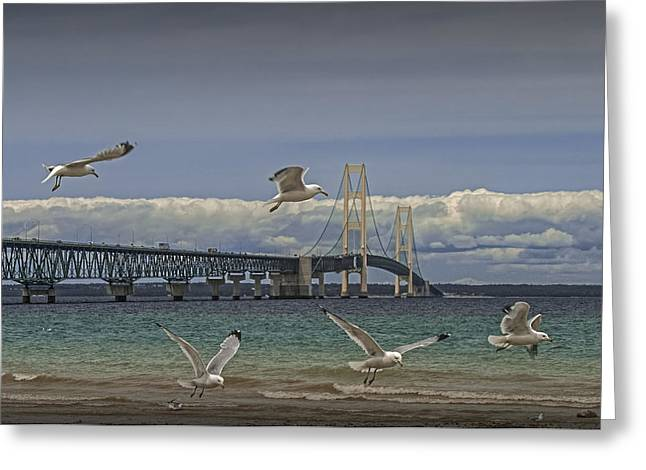 Gulls Flying By The Bridge At The Straits Of Mackinac Greeting Card