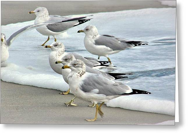 Gulls In The Surf Greeting Card